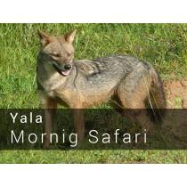 Yala National Park Morning Safari Game drive
