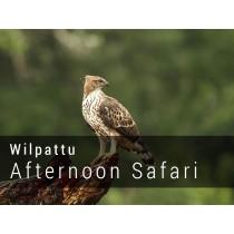 Wilpattu National Park Afternoon Safari Game drive