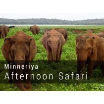 Minneriya Afternoon Safari Game Drives