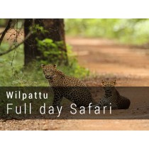 Wilpattu National Park Full day Safari Game drive